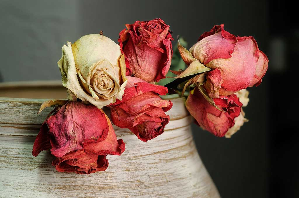 Dried red roses from wedding bouquet
